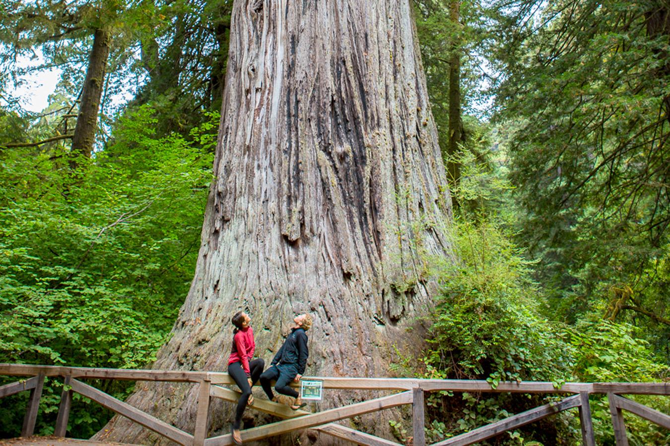 banner image is of Humboldt Destination Founder's Grove