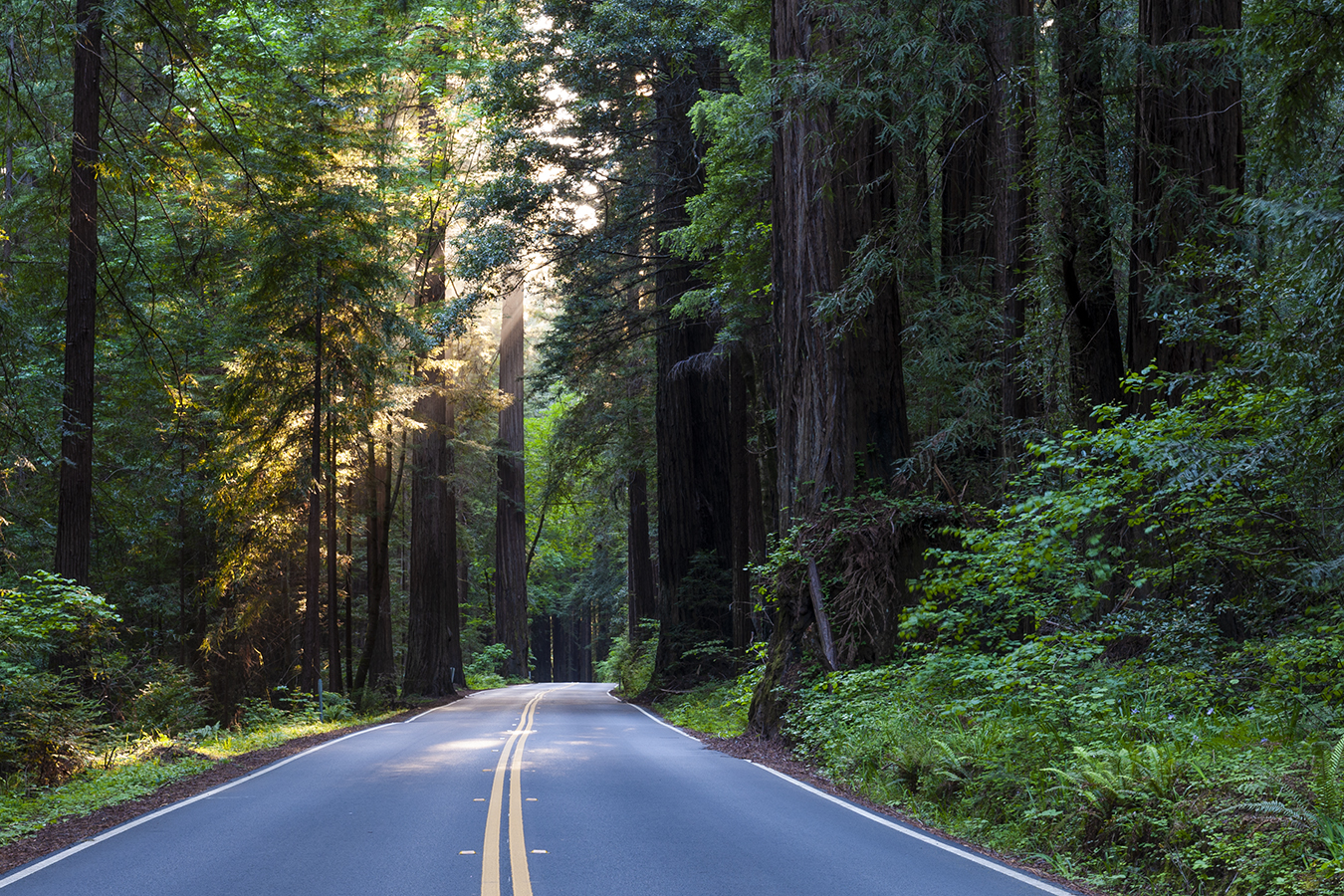 banner image is of Avenue of the Giants road and redwood trees